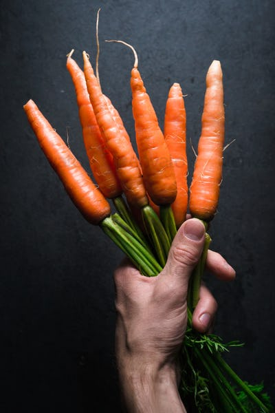 Orange carrots with a tops in hand on a gray background