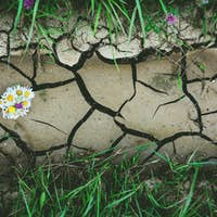 Background with dry crack ground with flowers and green grass