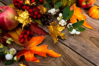 Thanksgiving background with golden maple leaves, rowan and whit