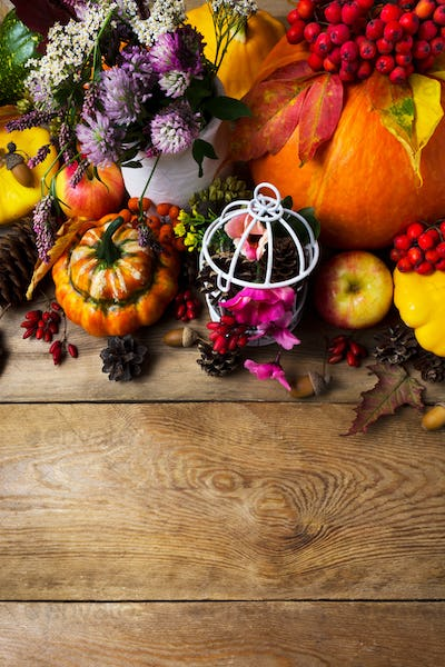 Fall background with pumpkins, pink and clover flowers, copy spa