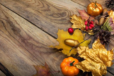 Fall golden maple leaves and pumpkins on the wooden table, copy