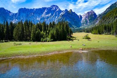 Horses graze on green field.Lake Lago di Fusine Superiore Italy Alps.