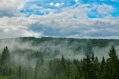 Misty forest after a thunderstorm