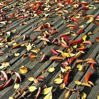 Dead leaves on the floor