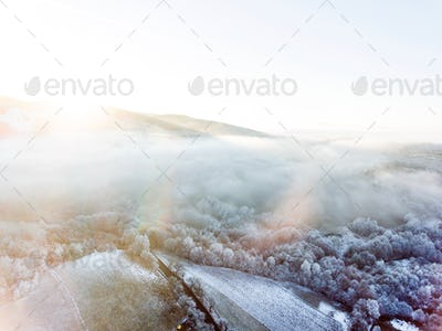 Aerial view of forest in winter.