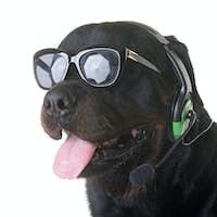 rottweiler and headphones