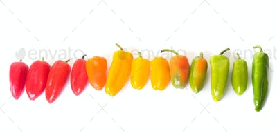 colorful sweet pepper in studio