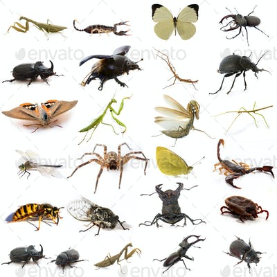 group of european insects