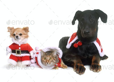 cat, dogs and christmas