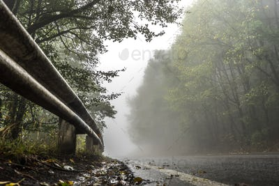 Wet road in the forest, fence and roadside