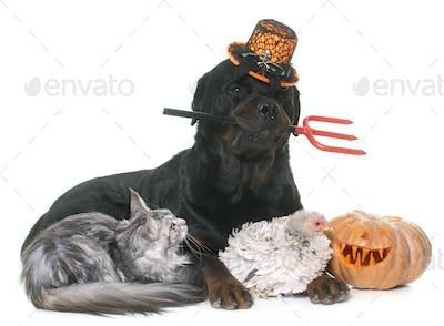 pet and pumpkin of halloween