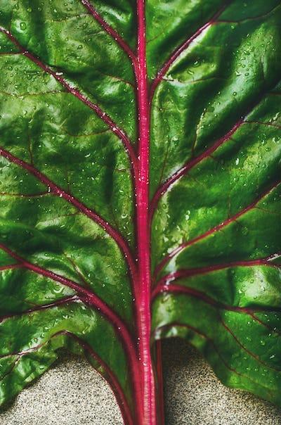 Flat-lay of fresh green leaves of swiss chard. Vegetarian food