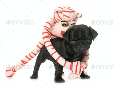 puppy black pug and toy