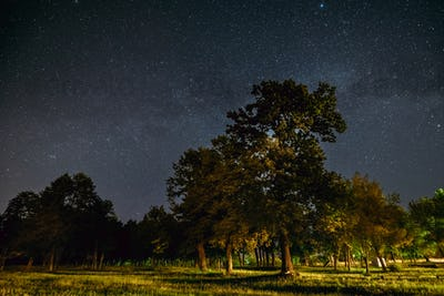 Green Trees Oak Woods In Park Under Night Starry Sky With Milky