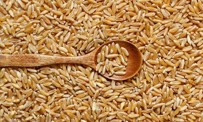 Pile of Kamut grain with a spoon