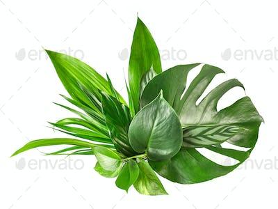 various tropical leaves