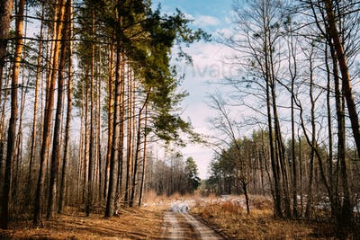 Road Path Walkway Through Forest. Nobody. Early Spring Or Late A