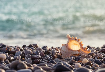 Sea rocky shore with a beautiful seashell