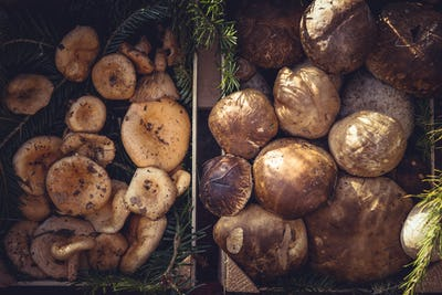 Collection of edible mushrooms in the market