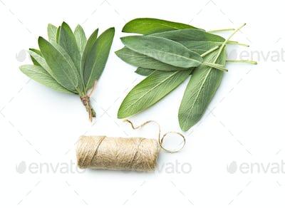 Salvia officinalis. Sage leaves.