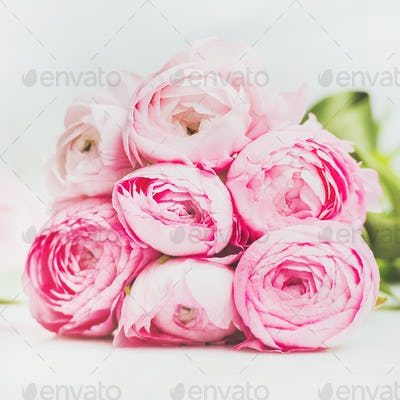 Light pink spring ranunkulus flowers on marble background, square crop