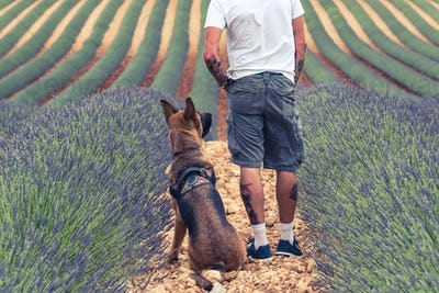 Couple travellers in lavender fields in Provence