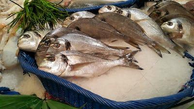 Dorado fish for sale at the market