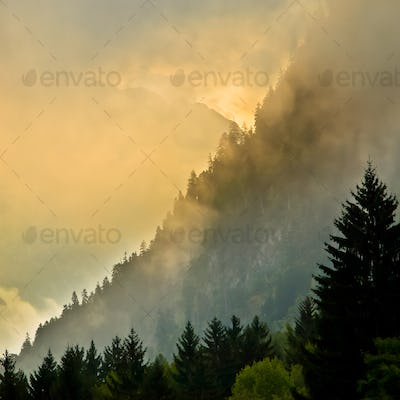 Sunrise over Mountain valley with pines