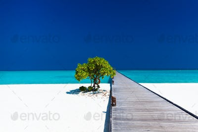 Beautiful beach with wodden jetty and single tree in Maldives