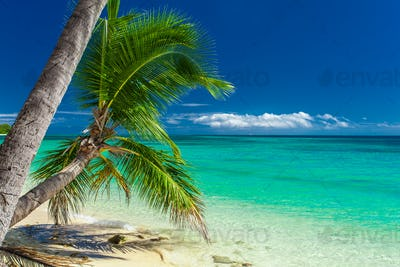 Palm trees hanging over tropical beach in Fiji
