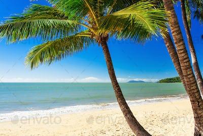 Single palm tree at Palm Cove beach, north Queensland, Australia