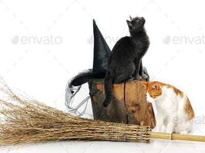 Cats with witch accessories