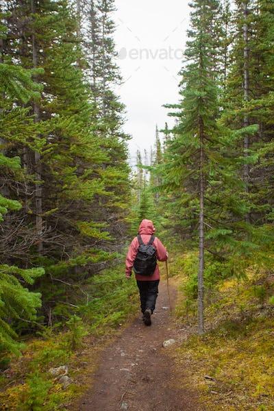 Hiking rainy autumn fall boreal forest taiga trail