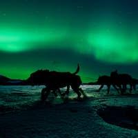 Yukon sled dog team pulling under northern lights