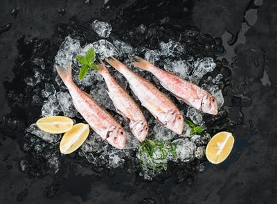 Raw Red Mullet fish with lemon, mint and rosemary on chipped ice