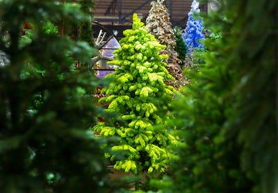 Xmas trees, christmas decoration shop, new year
