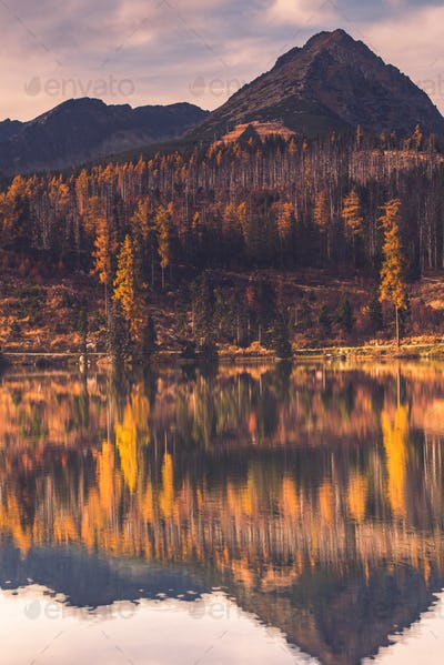 Autumn colors on forest over lake in high mountains