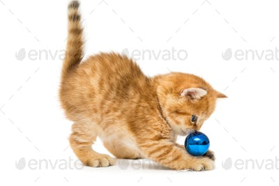 Little kitten plays a Christmas toy