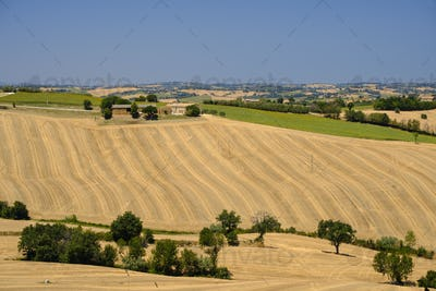 Summer landscape in Marches (Italy) near Ostra