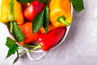 Red and Yellow Bell Peppers in grey basket. Healthy Organic Vegetables. Top view.