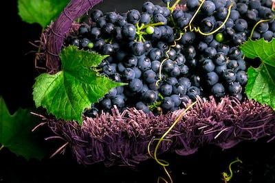 Red wine grapes in voiolet basket on bllack background.