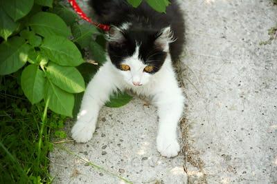 Black and white small kitten in green garden