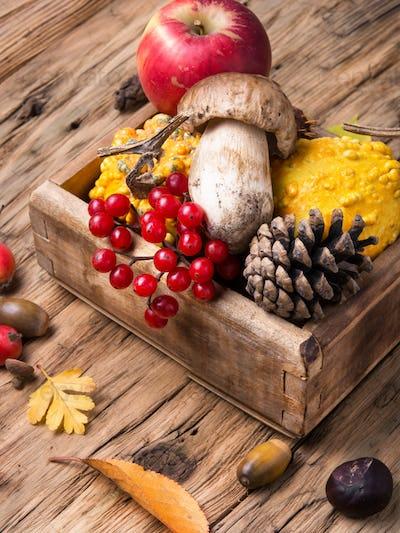 Autumn still life with pumpkin, apple, mushrooms