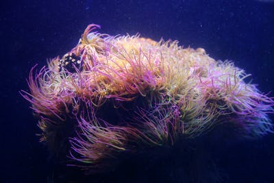 Marine animals closeup in aquarium