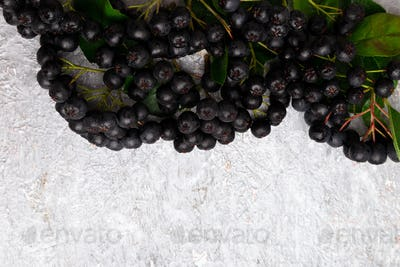 Chokeberry on grey background. Aronia berry with leaf. Top view. Copy space.