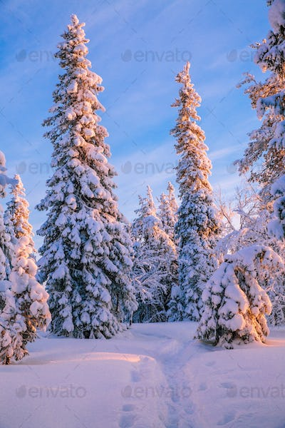 Trees covered with hoarfrost and snow in winter mountains