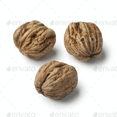 Fresh picked wet walnuts