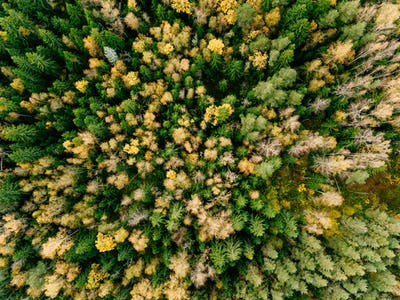 Aerial view of beautiful colorful forest during fall