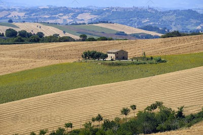 Summer landscape in Marches (Italy) near Appignano