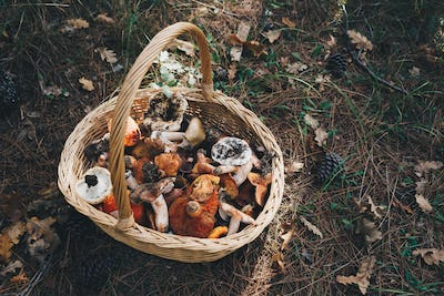 Basket with fresh mushrooms, top view